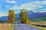 September Aspens Near Westcliffe 2019 Oil on Linen 24x36